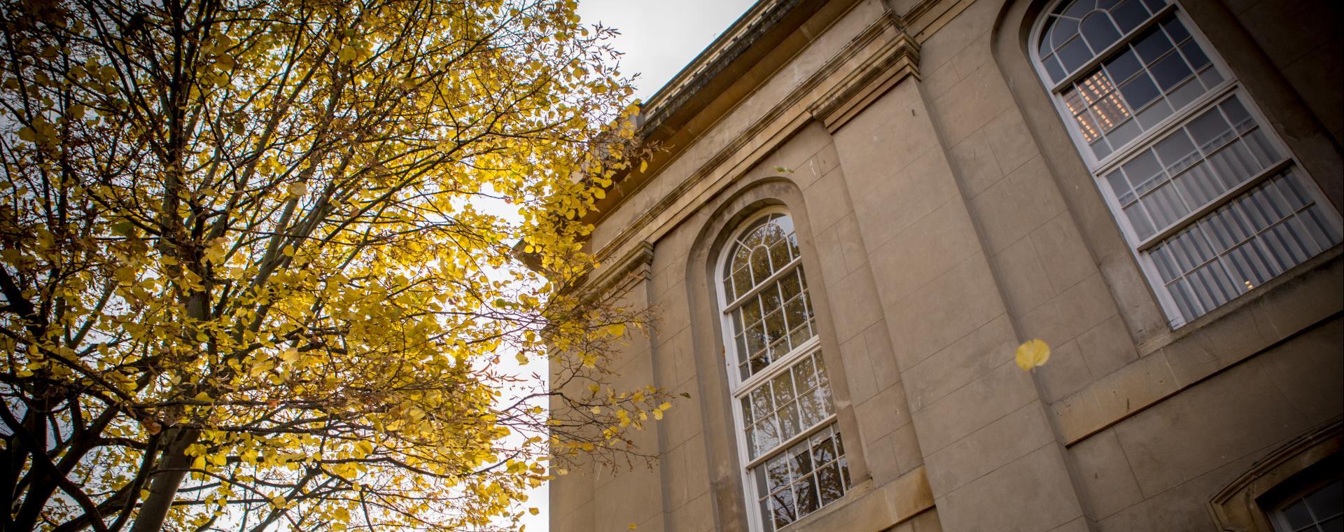 Autumnal tree outside Brunwick Court, Bristol